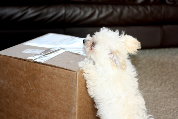 Scamp gets a package