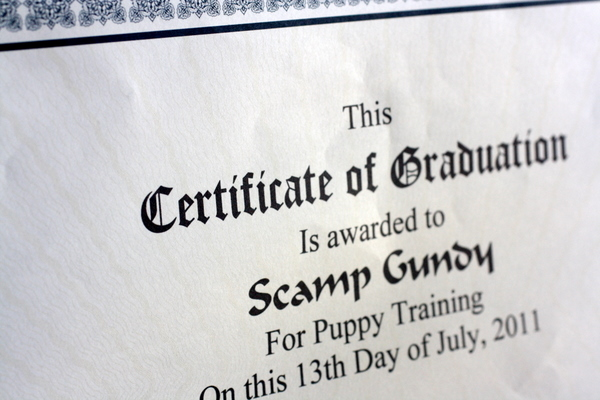 Scamp Graduation Certificate