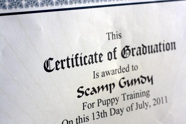 Scamp Graduation Certificate