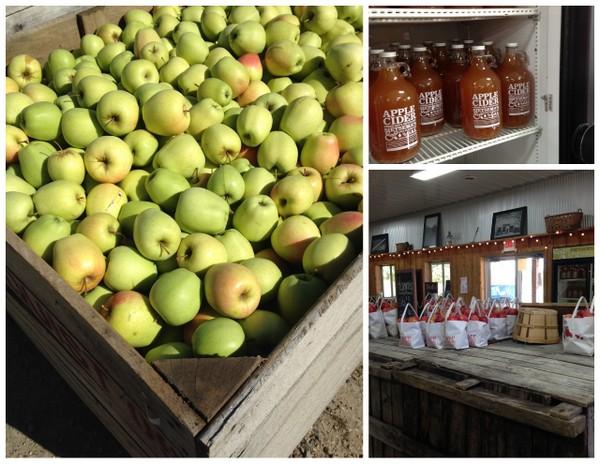 Apple Orchard Tour