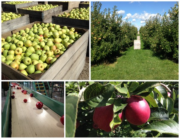 Apple Orchard Tour1