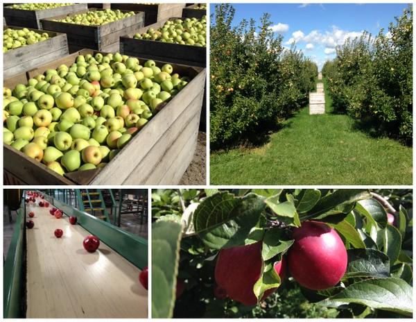 Apple Orchard Tour1